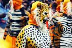 جشنواره ببر، هندوستان