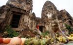 جشنواره بوفه میمون - تایلند