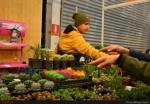نمایشگاه گل و گیاه و گیاهان دارویی ؛ اهواز - دی و بهمن 97