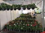نمایشگاه گل و گیاه و ادوات باغبانی و گلخانه ای ؛ رشت - مرداد 98