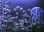 نمایشگاه گل و گیاه، گیاهان دارویی و ماهیان تزیینی ؛همدان - مهر 98