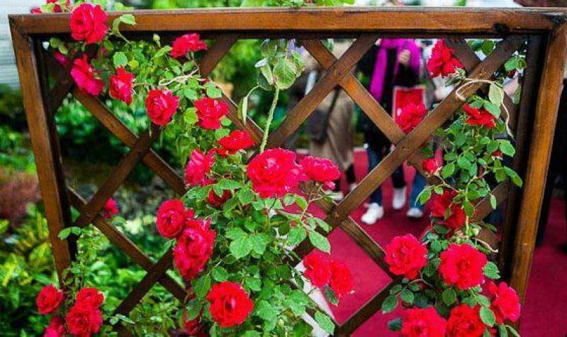 پانزدهمین نمایشگاه گل و گیاه - تهران