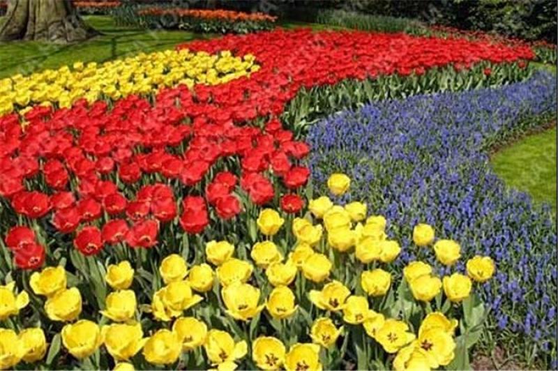 نمایشگاه گل و گیاه، ادوات باغبانی و فضای سبز ؛ انزلی -۹۶