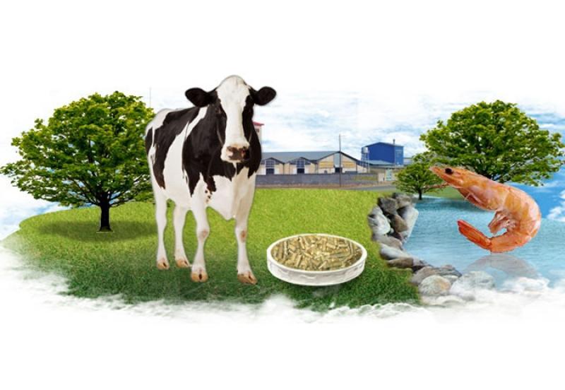 نمایشگاه گل و گیاه، دام و طیور، ماشین آلات کشاورزی و آبزیان ؛میاندوآب - اردیبهشت 98