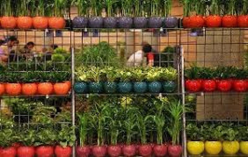 نمایشگاه گل و گیاه ؛بندرعباس - دی و بهمن 98