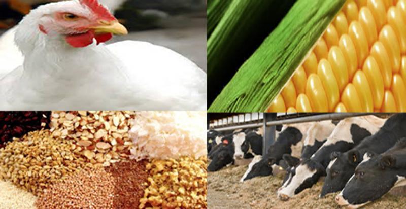 نمایشگاه کشاورزی، ماشین آلات و آبیاری، دام و طیور، شیلات و آبزیان و صنایع وابسته ؛ بجنورد - آبان 98