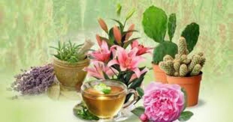 نمایشگاه گل، گیاه و گیاهان دارویی؛خوزستان - دی 98