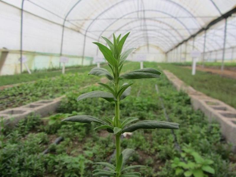 نمایشگاه گل، گیاه، تجهیزات آبیاری، گلخانه و گیاهان دارویی ؛ سنندج - اسفند 98