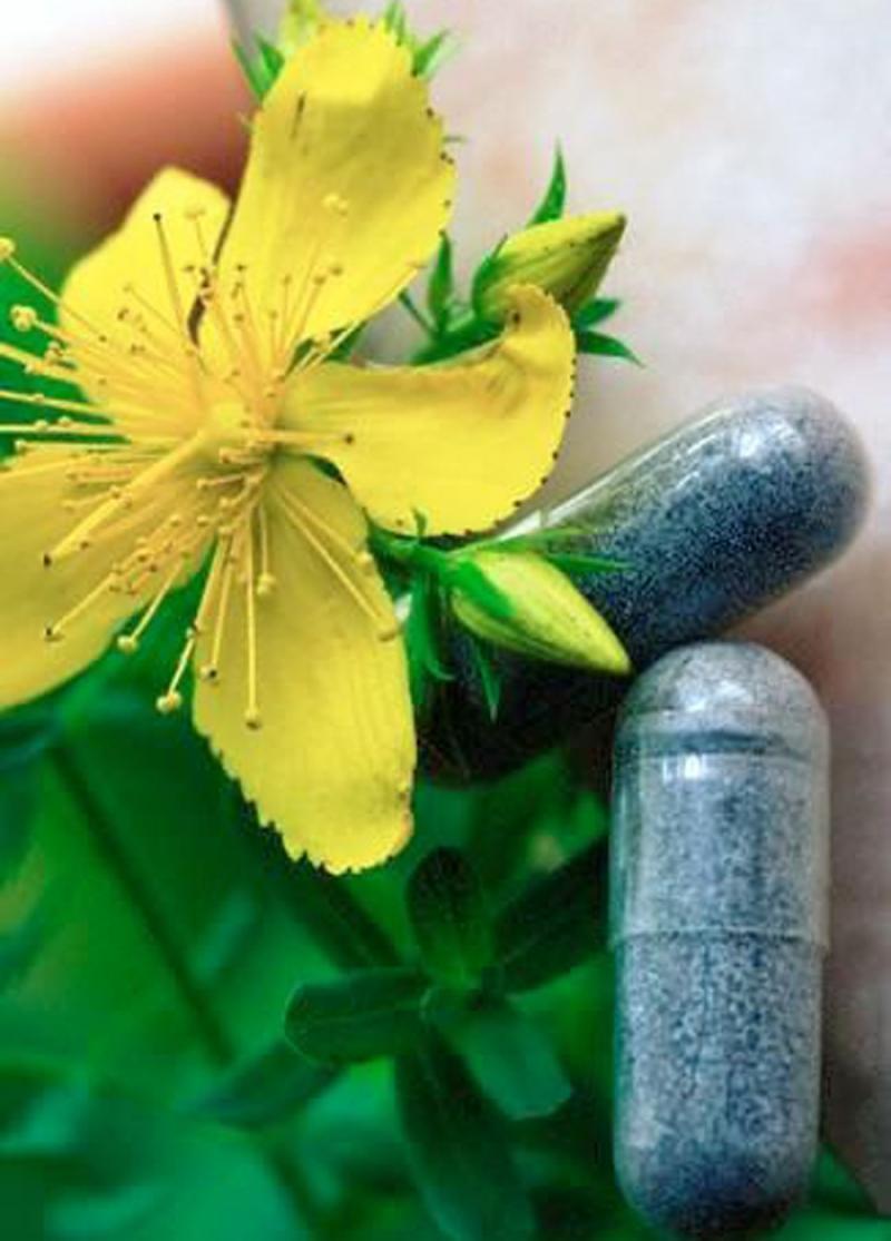 نمایشگاه گل و گیاه و گیاهان دارویی ؛قزوین - مهر 98