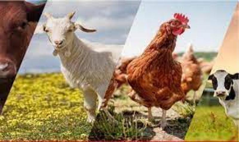 نمایشگاه دام و طیورو کشاورزی یزد 1400